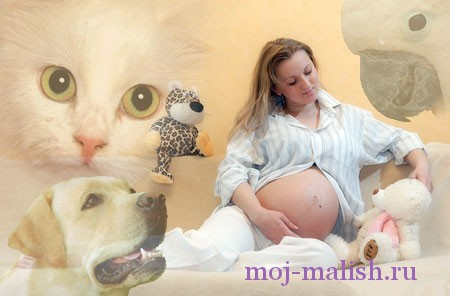 Домашние животные и беременность